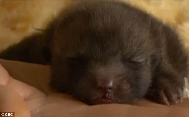 Family Realizes Tiny Puppy Isn't A Puppy At All