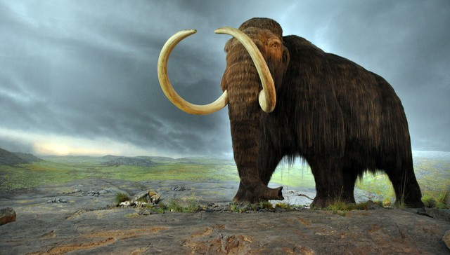 Bringing Animals Back From Extinction Comes With Controversy