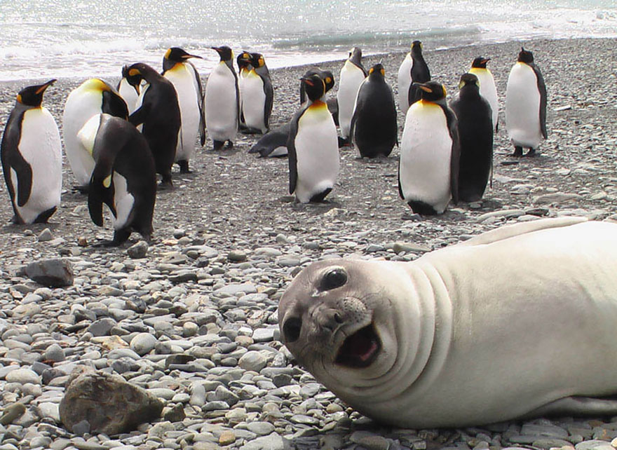 The Funniest Animal Photobombs Ever