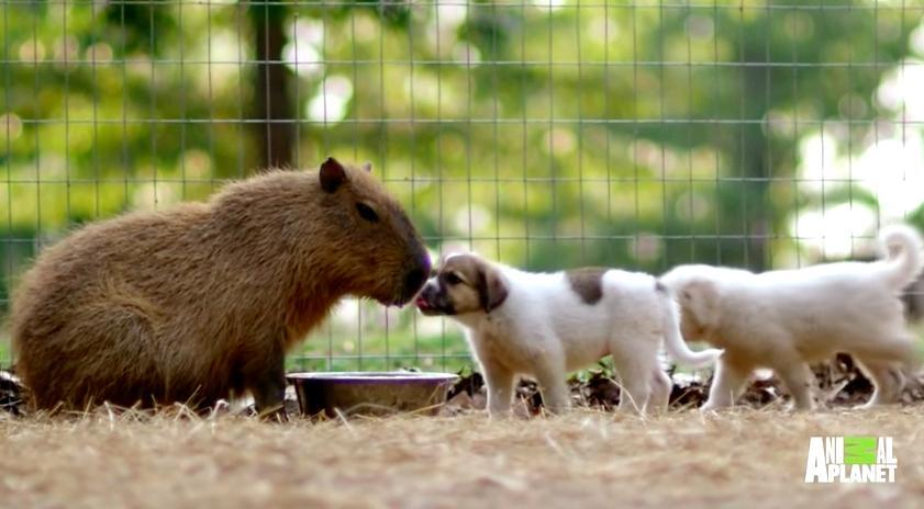 Orphaned Puppies Find The Most Unusual New Mother