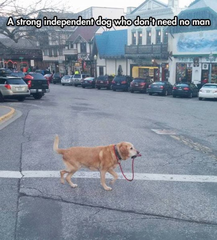 Strong Independant Dog