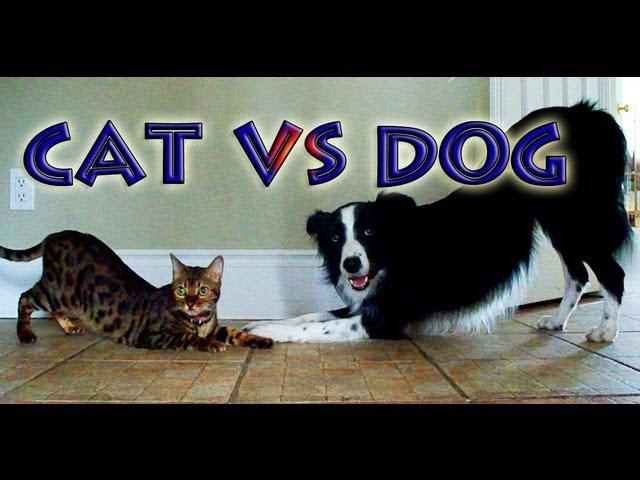 Cat Vs. Dog – Trick Contest