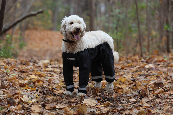 dog-pants-muddy-mutts-dog-apparel-13