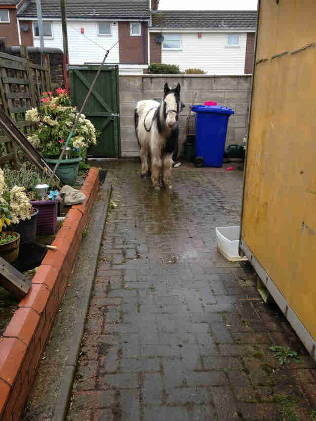 Woman Walks Out Into Her Tiny, Walled-In Backyard — And Finds A Pony