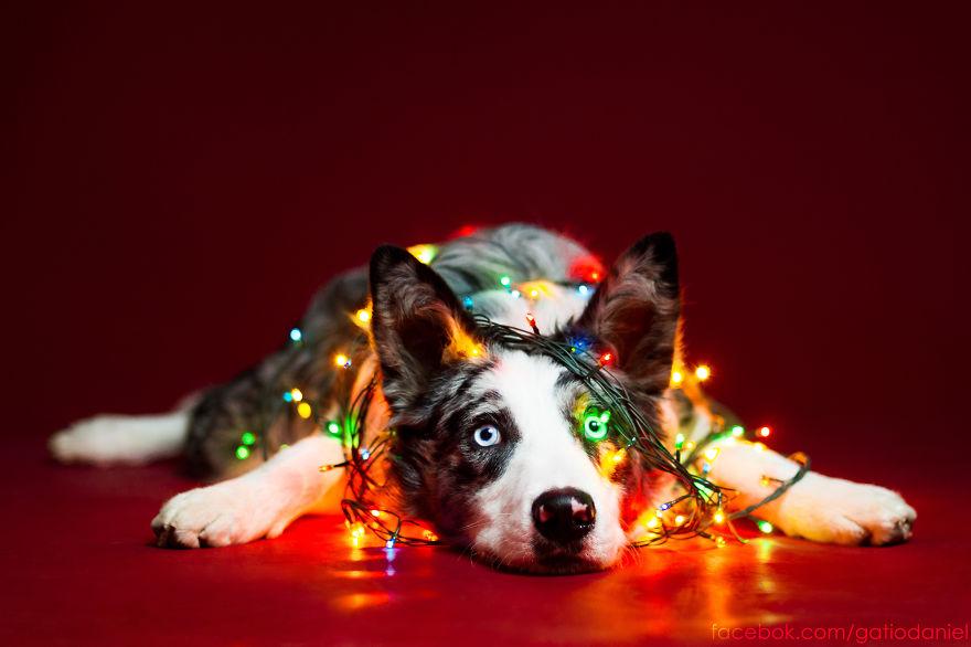 I Took Christmas-Themed Dog Portraits To Wish You Happy Holidays