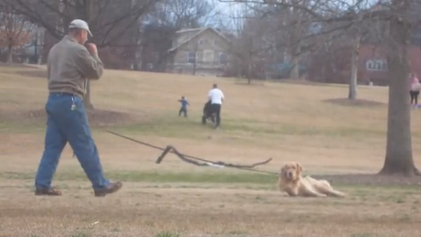 this funny and lazy dog refuses to leave the park
