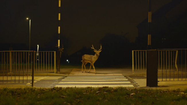 Stressful Week? Watch This Beautifully Serene Ad About Urban Deer