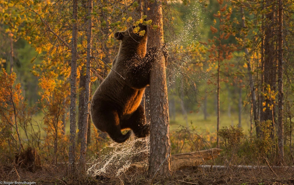 Animal World Of Scandinavia (40 Photos)