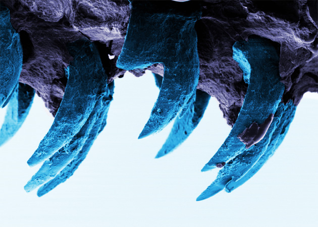 Sea snail teeth may be the key to super-light race cars