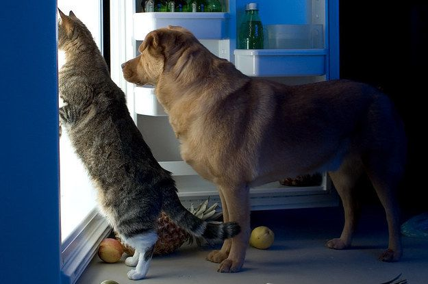 17 Foods You Should Never Let Your Pets Eat