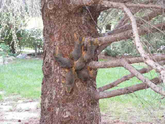 Baby Squirrels Find Themselves Trapped In The Most Awkward Situation