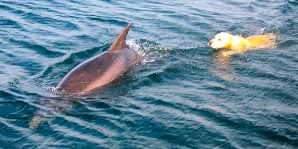 Amazing Footage Of A Dog Playing With A Dolphin In Ireland