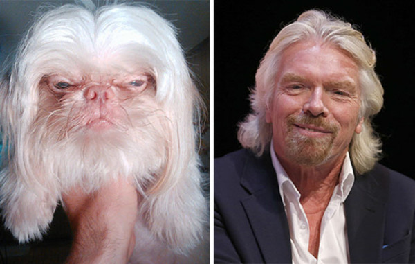The 15 Most Hilarious Dog And Celebrity Doppelgangers