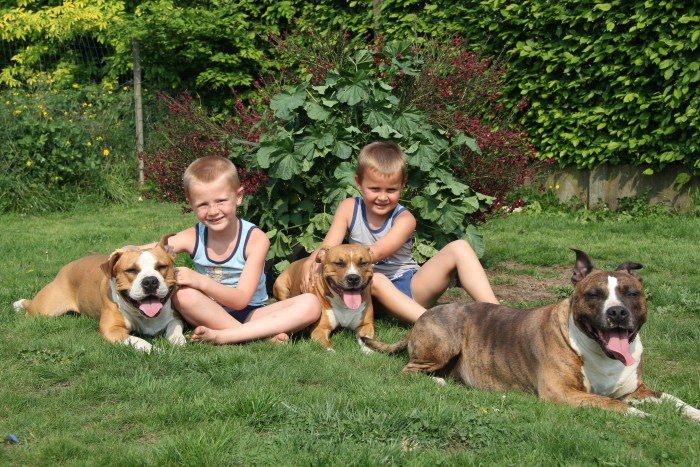 Helping Kids and Dogs Interact Safely