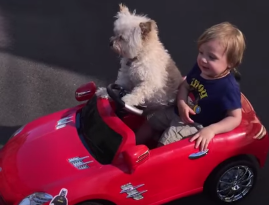 Dog Driving His Little Friend Is The Cutest Thing You'll See Today