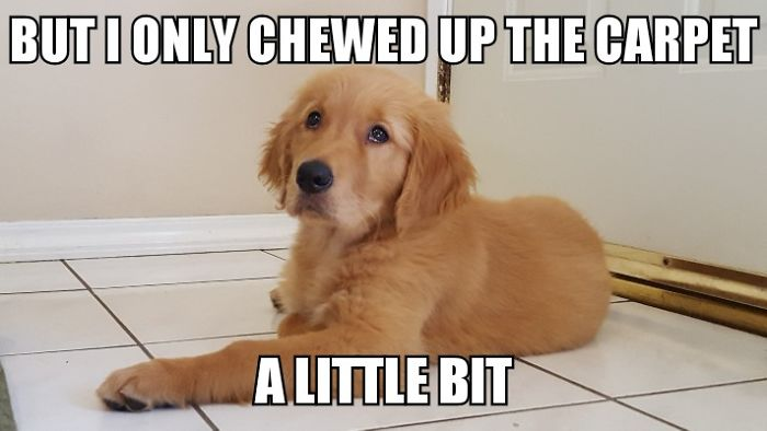 I Took Photos Of My 4-Month-Old Puppy & Added Captions To Them Of Her Thoughts