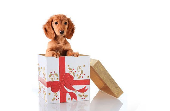 Is it okay to give a dog as a gift?