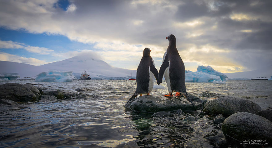 Cool Penguins And Other Antarctic Animals