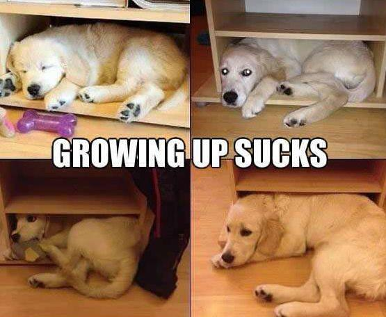 Growing Up Sucks