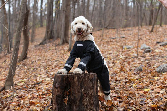 dog-pants-muddy-mutts-dog-apparel-14