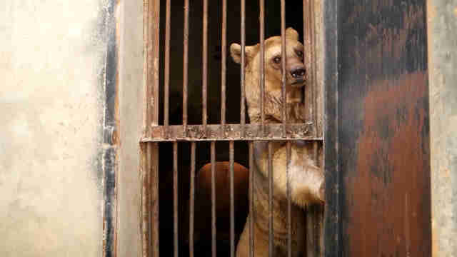 Bears Saved From Worst Owner…