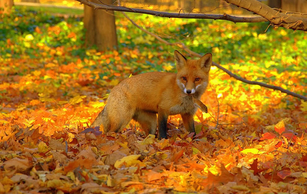 Beautiful Animals Enjoying Beautiful Autumn