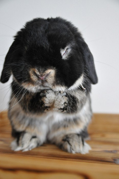 16 Super Adorable Bunnies To Brighten Your Day