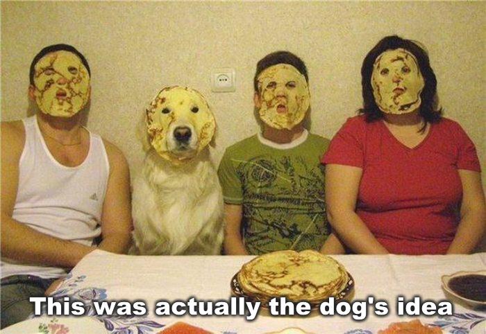 Dog's Idea