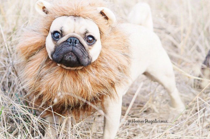 11 Pups Whose Invitations To The Costume Party Got Lost In The Mail