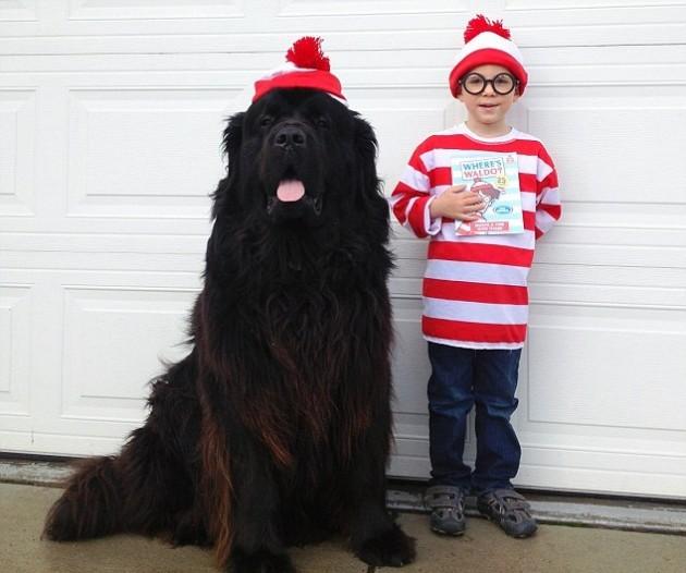 10 Best Dogs For Children