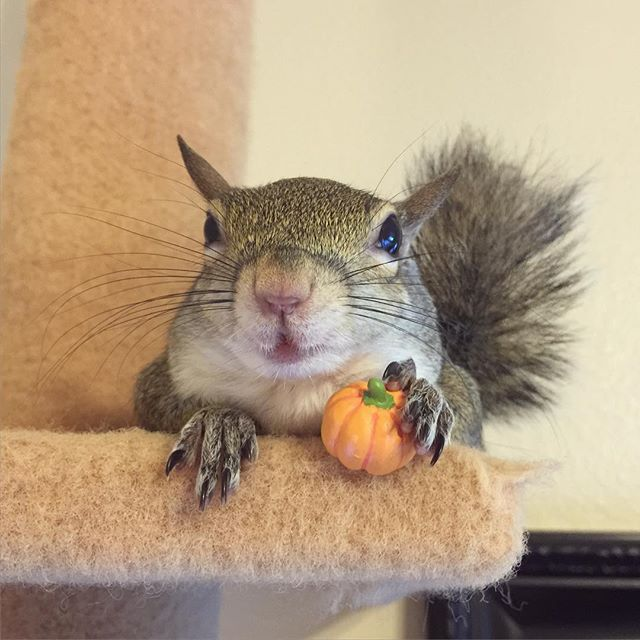 Rescued Squirrel Became Instagram Star