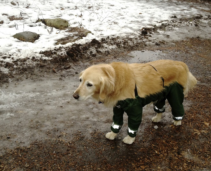 dog-pants-muddy-mutts-dog-apparel-1