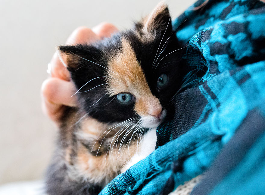 The Newborn Kitten Photoshoot I Did With A Rescue Kitten That Rescued My Sister!