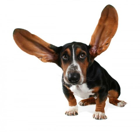 Ear Infections in Dogs: Symptoms, Causes and Treatments
