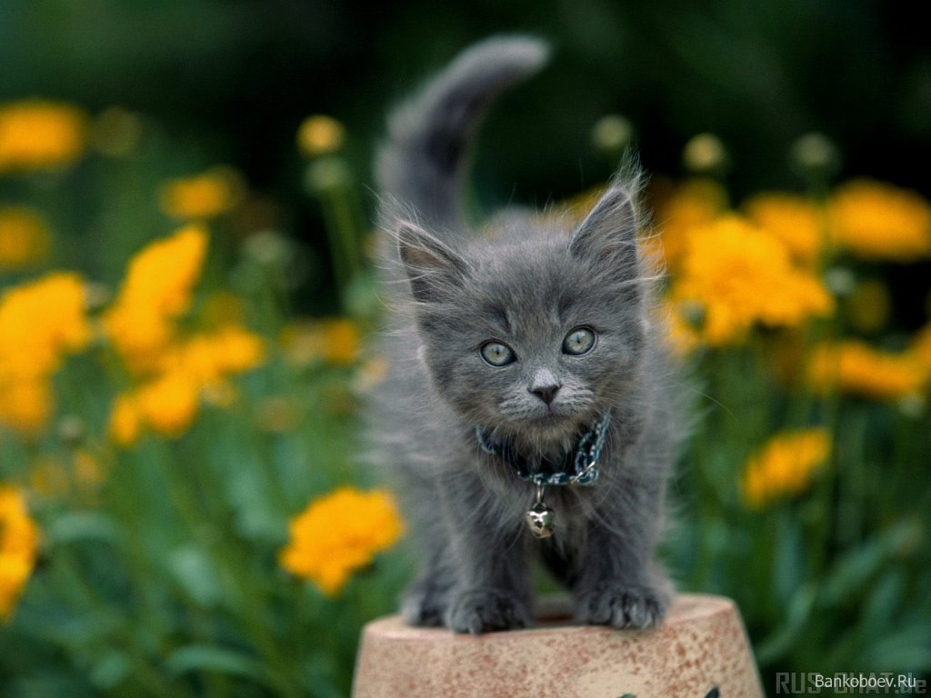 100 Cute Names for Your Gray Kitten