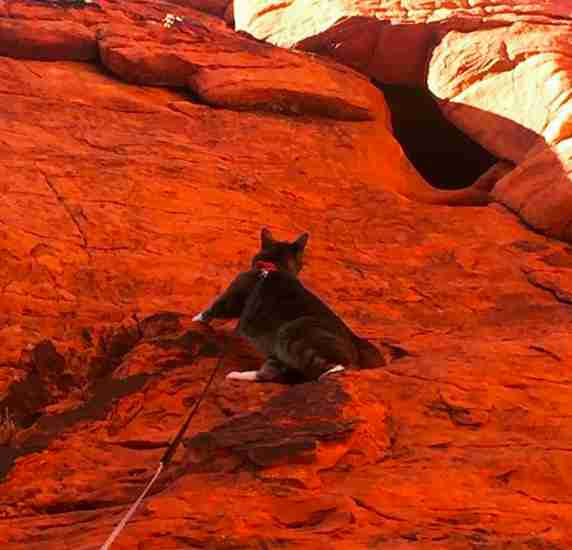 Rescue Cat Loves Rock Climbing With New Family