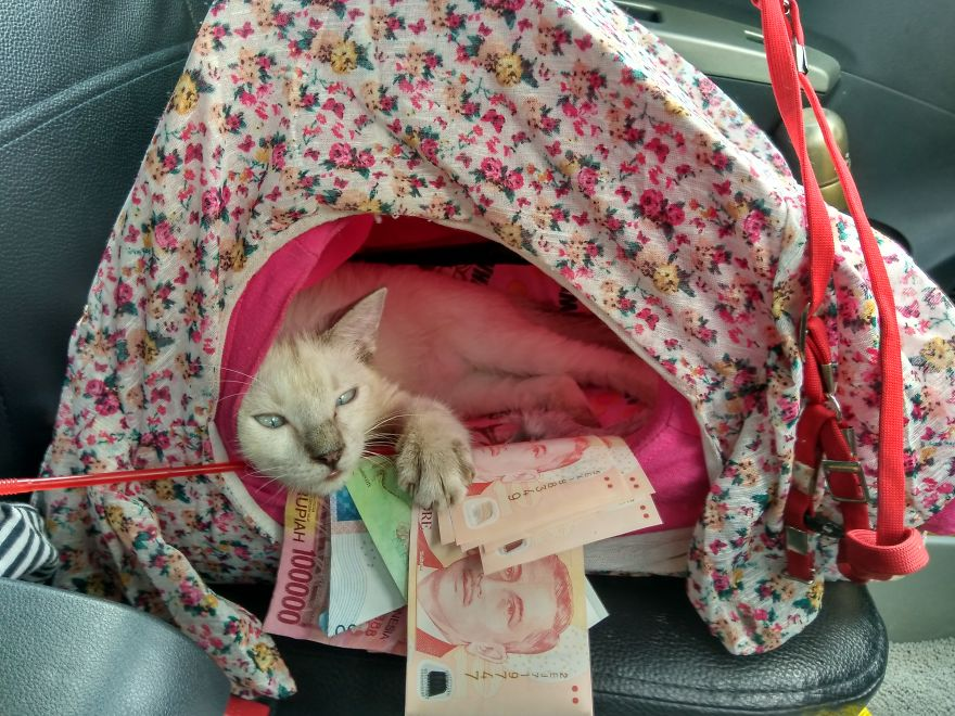 Meet Milky, A Cat Traveler, I'm A Supermeowdel!