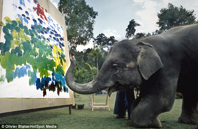Extraordinary elephants create beautiful paintings using their trunks, feet and special brushes