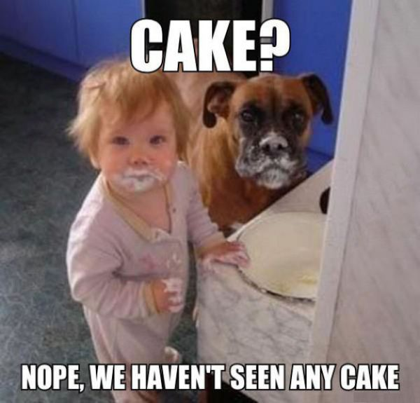 No Cake Here
