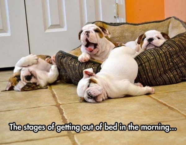 Stages Of Getting Out Of Bed