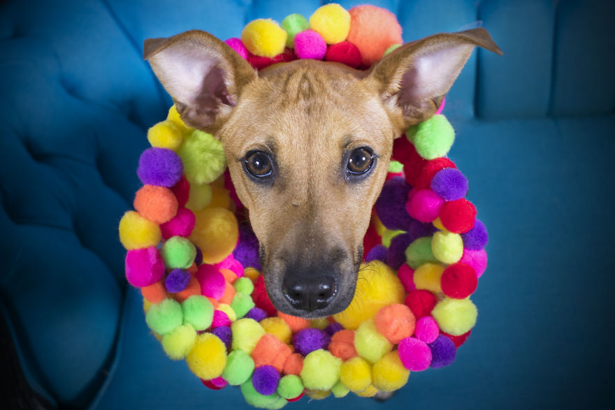 """""""Cones Of Fame"""": A Rescue Dog Photography Project"""