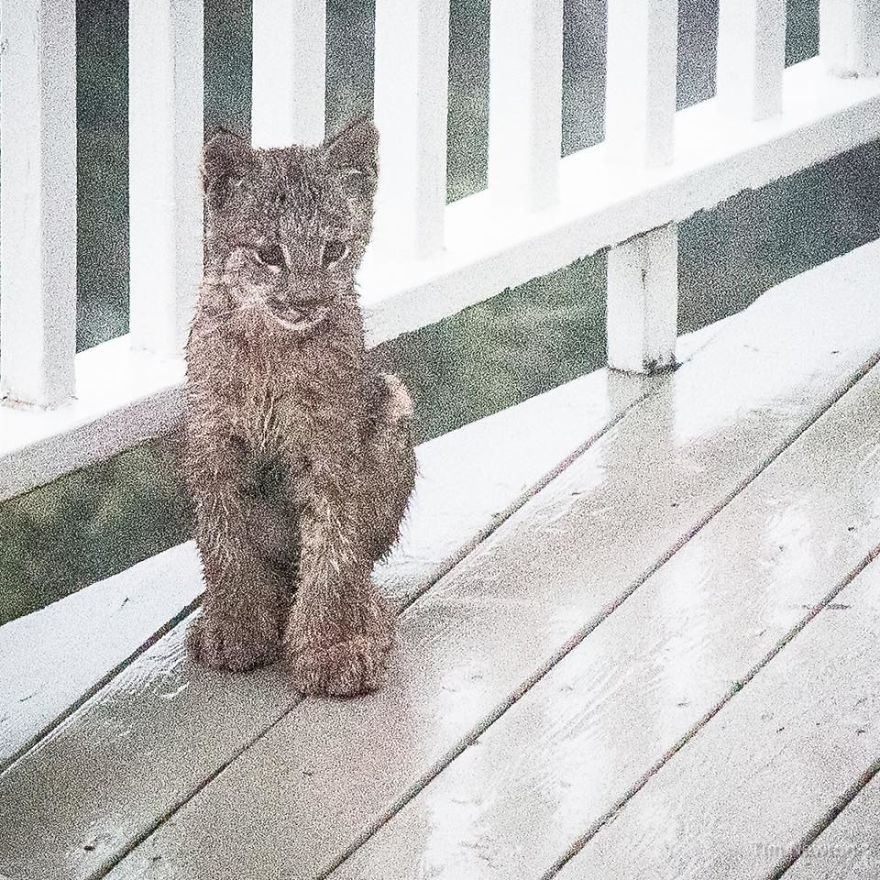 This Man Woke Up To A Strange Noise, Then He Saw This On His Porch
