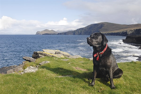 Health and lifestyle risk assessments: Is your pet living on the edge?