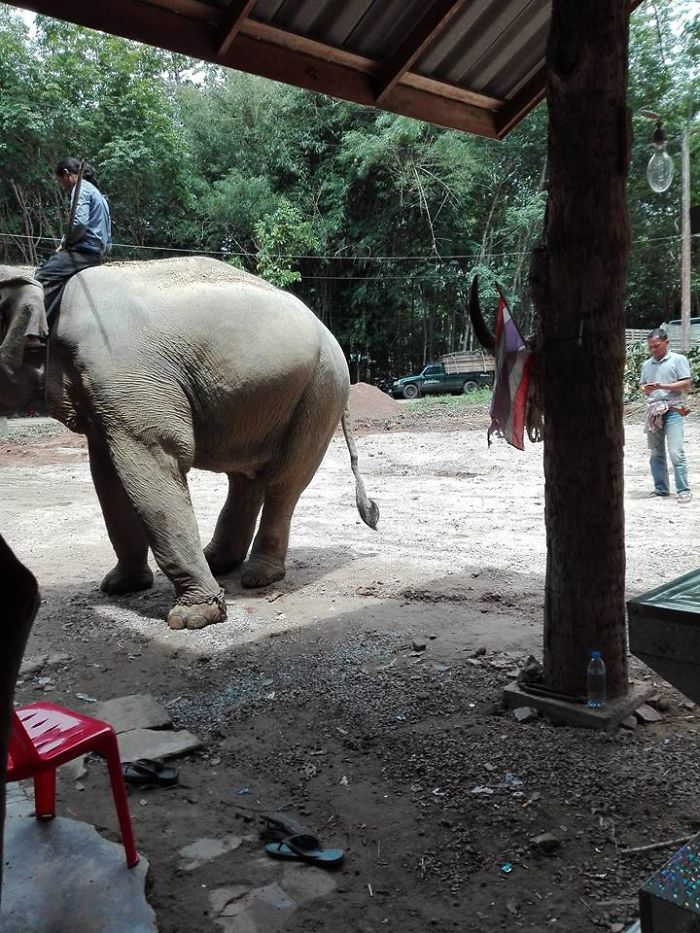 A Best Loyal Elephant Weeps And Kneels Joining Owner's Funnel That Makes Everyone Touching