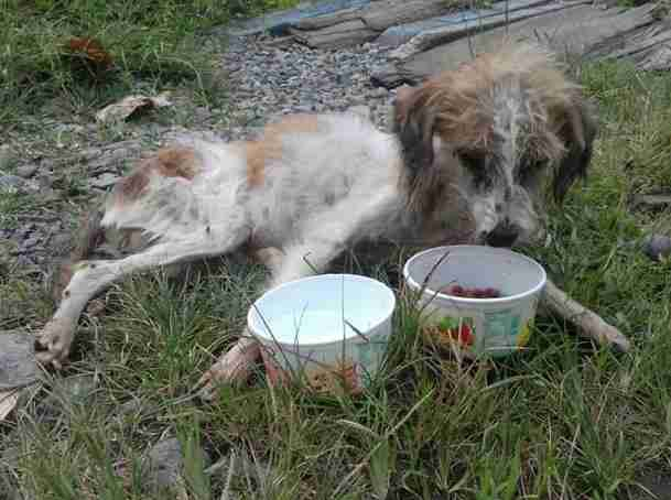 Emaciated dog found by rescuers in Costa Rica