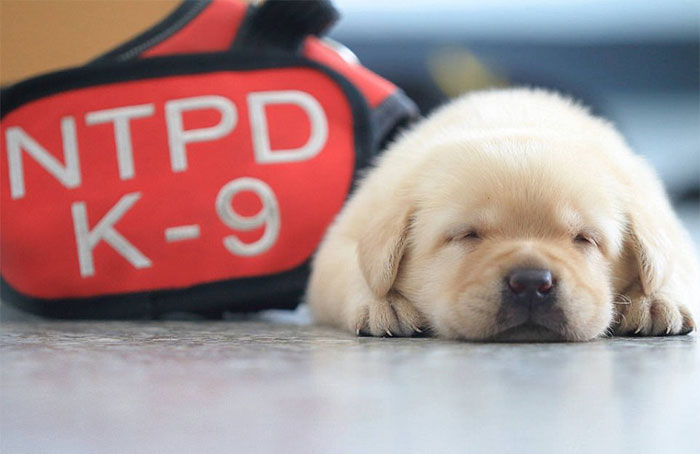 Police Recruits New Puppies, And The Internet Is Having Serious Cuteness Overload