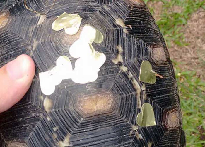 Man Finds Evidence His Tortoise Went Out Partying Without Him… For 3 Weeks