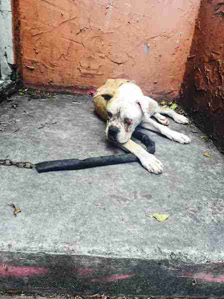 Abandoned dog chained up on landing