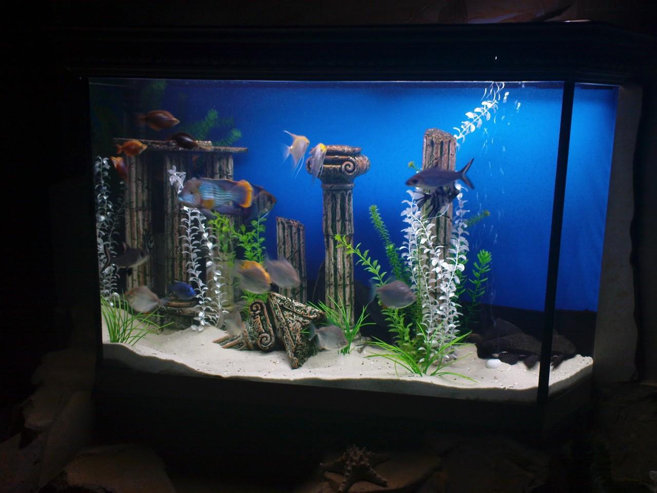 Декор аквариума аквариум своими руками