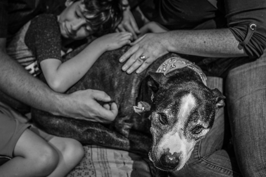"""Where Grief And Celebration Meet"": This End Of Life Pet Photo Session Will Break And Warm Your Heart"